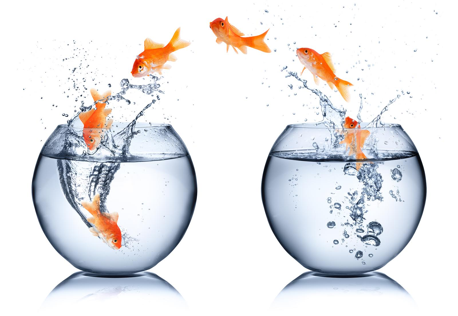 Fish_jumping.jpg